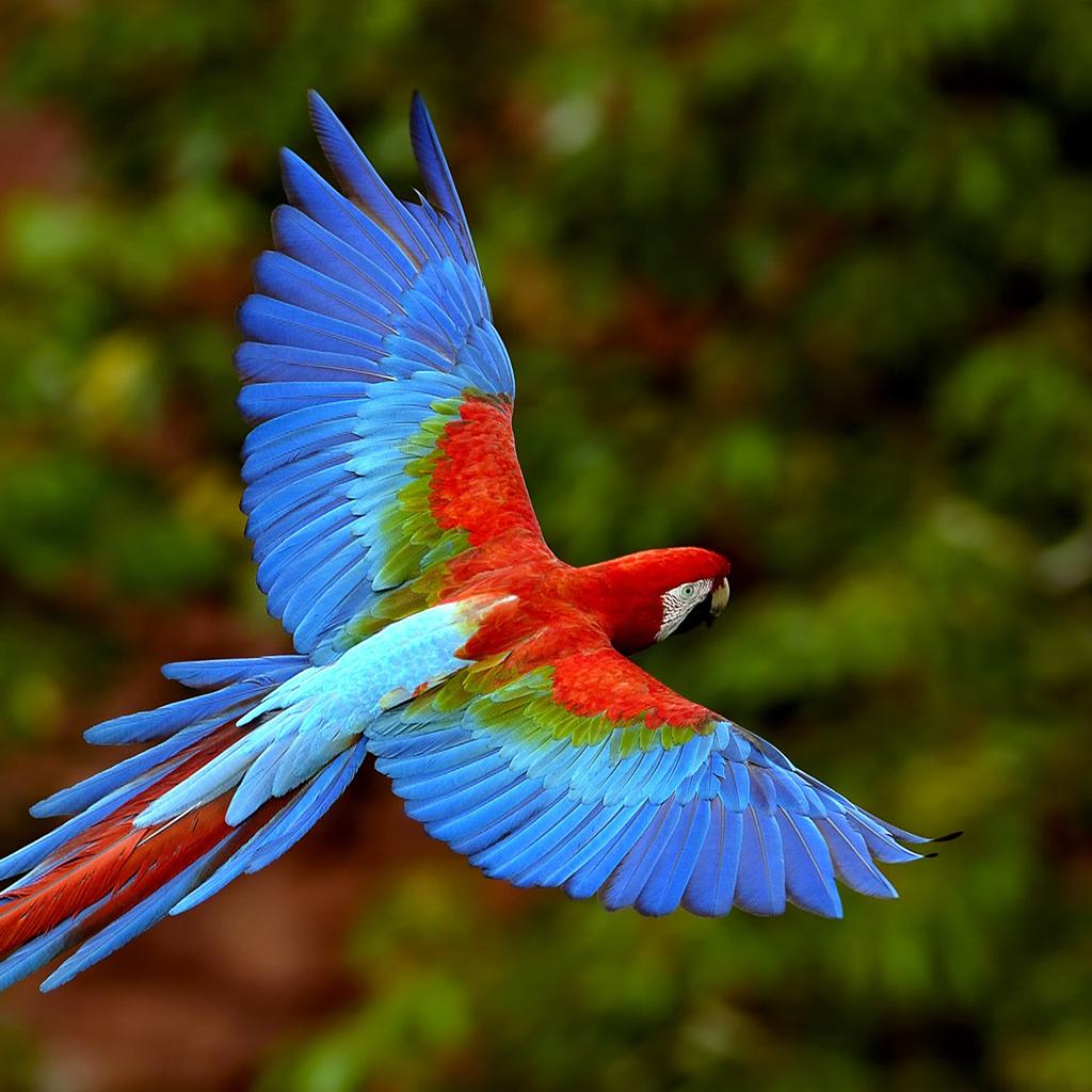 Colorful Parrot iPad Wallpaper