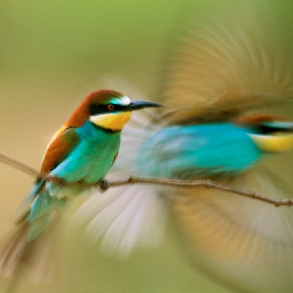 Hummingbird iPad Wallpapers