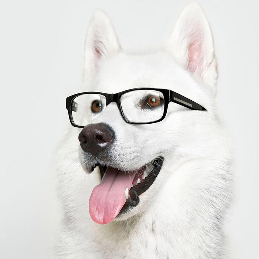 pics photos large preview funny dog ipad wallpaper