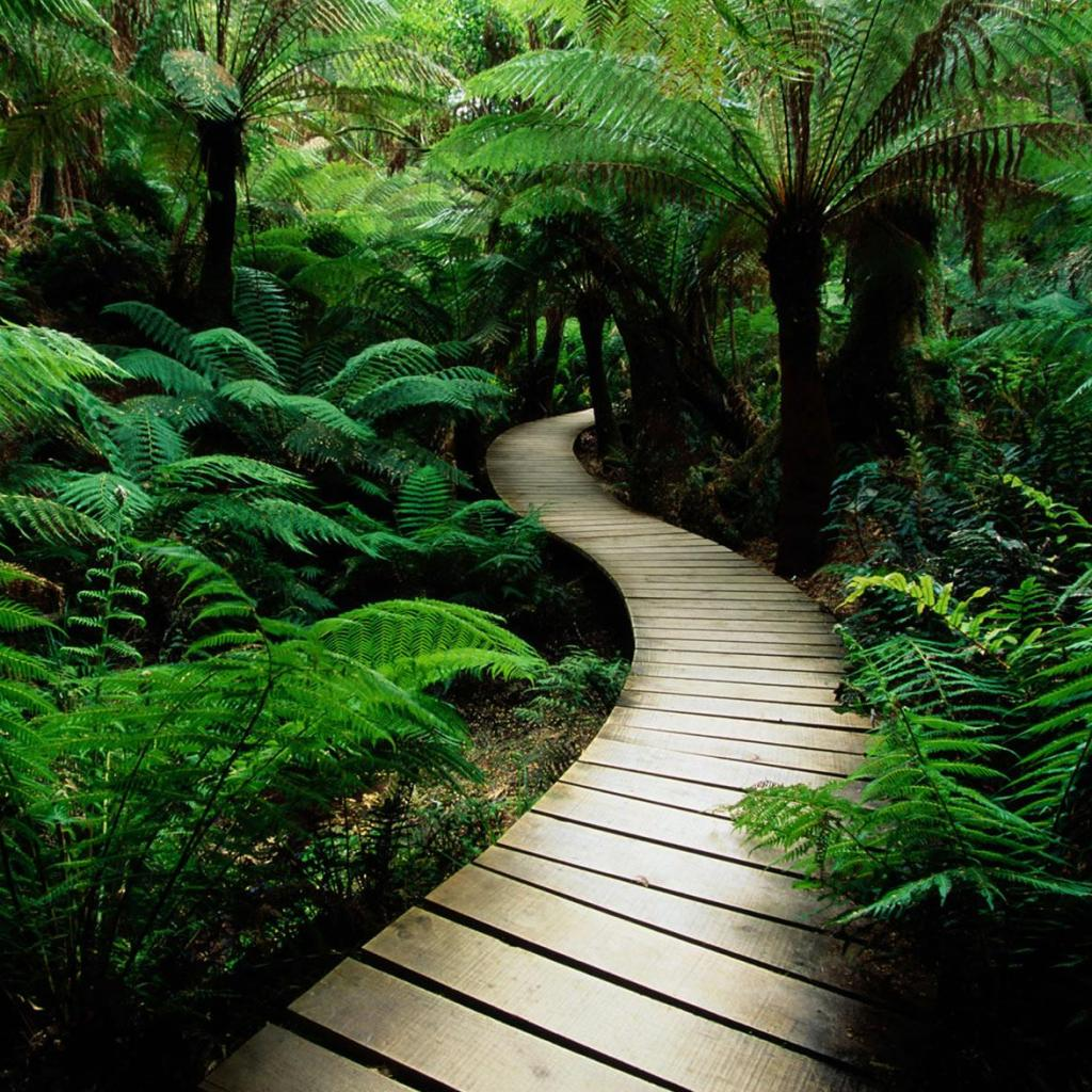 Jungle Backyard Ideas : Jungle Boardwalk  iPad Wallpaper  Download free iPad wallpapers
