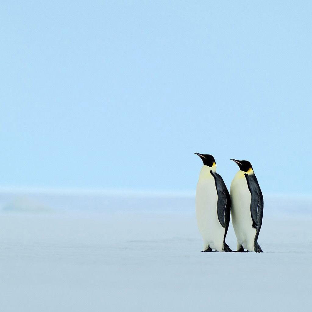Penguins | iPad Wallpaper - Download free iPad wallpapers ...